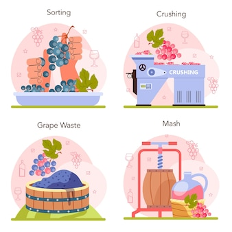 Wine production concept set grape selection and processing grape berries