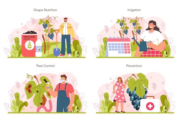 Набор концепции производства вина выбор и выращивание виноградного дерева