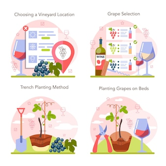 Wine production concept set grape tree selection and cultivation