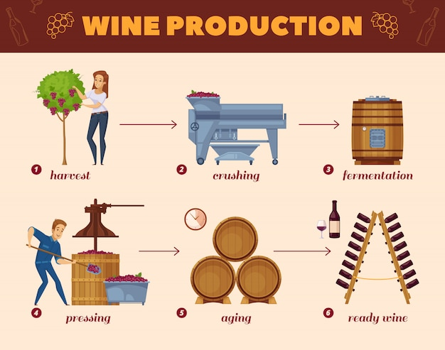 Wine production process cartoon flowchart