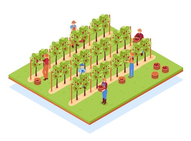Composizione isometrica nella cantina con i lavoratori in cappelli con i canestri durante la raccolta sull'illustrazione della vigna