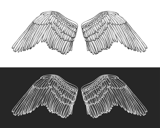 Wing angel on dark and light background hand draw sketch.