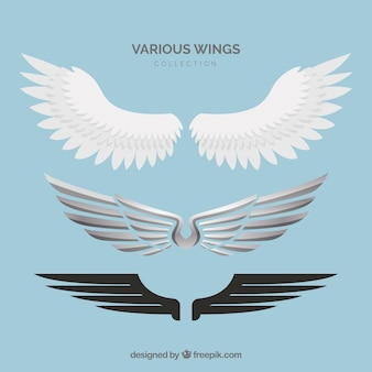 Wings vector. Different styles.