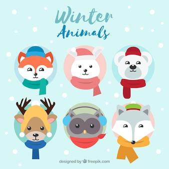 6의 겨울 동물 모음