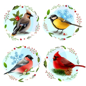 Winter birds design concept