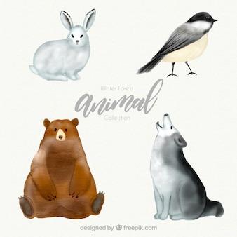 Winter forest animal