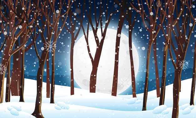 Winter forest at night scene
