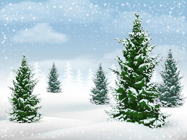 モミの木と冬の風景。