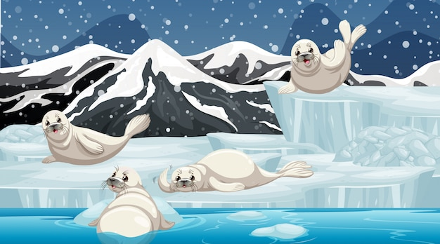 Winter scene with four seals on ice