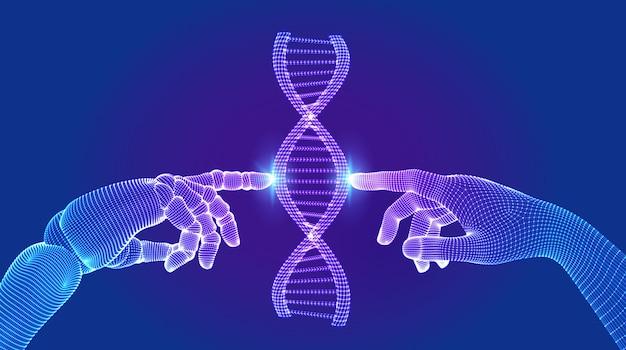 Каркасная сетка структуры молекул последовательности днк. руки робота и человека касаются днк, соединяющейся в виртуальном интерфейсе будущего.