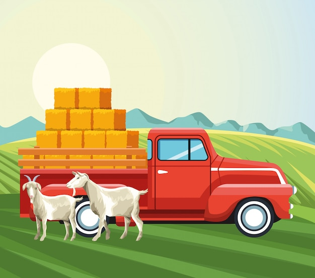 干し草のwithとヤギとピックアップトラックの農業