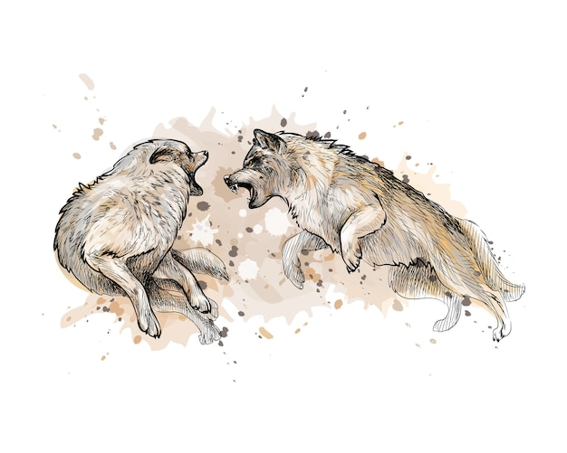 水彩のスプラッシュからオオカミの戦い、手描きのスケッチ。塗料のイラスト