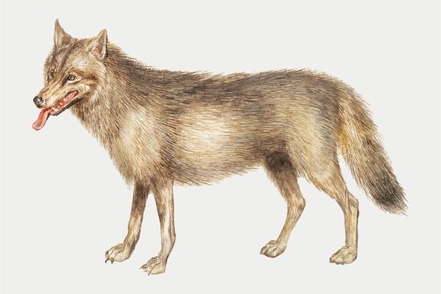 Волк в винтажном стиле