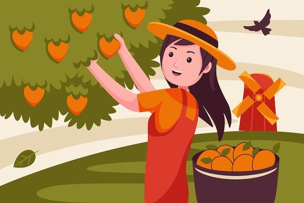 여자 농부는 망고 나무에서 과일을 선택합니다.