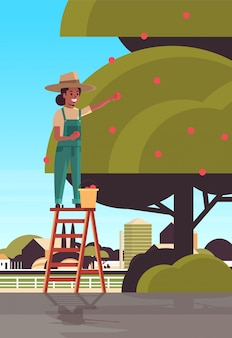 Woman farmer picking ripe apples from tree african american girl on ladder gathering fruits in garden harvest season concept countryside background flat vertical