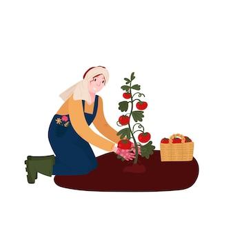 Женщина выращивает помидор на ферме фермер выращивает органические овощи в саду женщина в общей резиновой одежде