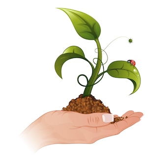 Woman hand with the young green sprout from the ground with water drops and ladybug, vector illustration