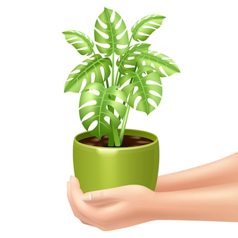 Woman holding a houseplant with hands and green pot