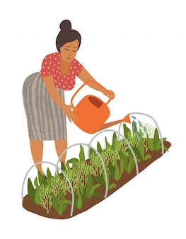 Woman is watering garden vegetables in a greenhouse from a watering can.