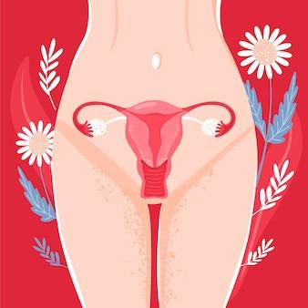Женщина репродуктивного здоровья. матка