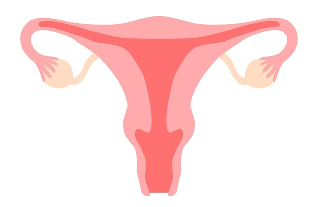 Woman reproductive system clipart include uterus womb vagina ovary cervix