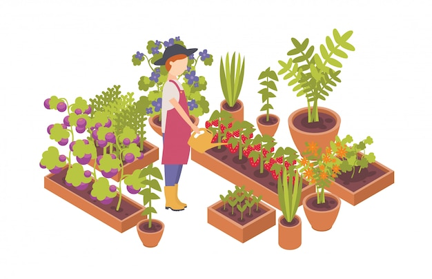 Woman wearing hat and holding watering can and plants growing in garden beds isolated on white background.illustration