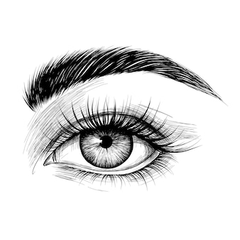 Womans eye with eyebrow and long eyelashes