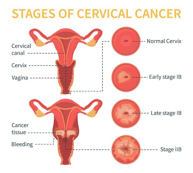 女性の生殖システム