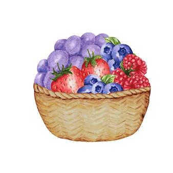 分離された様々な果実と木製のバスケット。イチゴ、ラズベリー、ブルーベリーの水彩イラスト