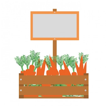 Wooden box with carrots isolated icon