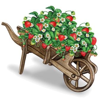 イチゴの木でいっぱいの木製水彩手押し車