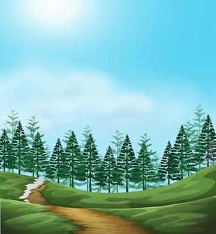 A woodland landscape scene illustration