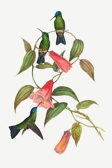 ウッドニンフの鳥は、ジョン・グールドとヘンリー・コンスタンティン・リヒターのアートワークからリミックスされた動物のアートプリントをベクトルします