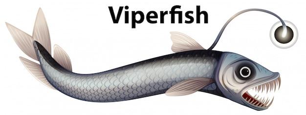 Design wordcard per viperfish con bianco