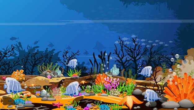The world of deep-sea fish, the natural beauty and life of aquatic animals on the sea floo
