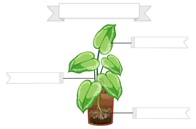 子供のための植物ワークシートの一部を書く