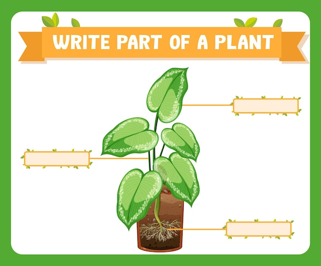 Write parts of a plant worksheet for kids