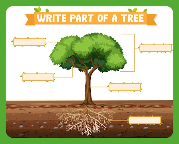 Write parts of a tree worksheet for kids