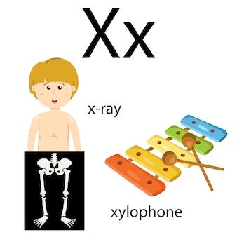 X語彙のイラストレーター