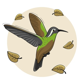 Xantus bird cartoon humming bird flying colibri