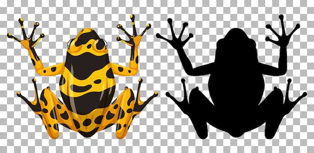 Yellow banaded frog with its silhouette isolated on white