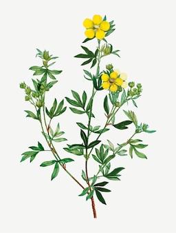 노란 미나리 꽃