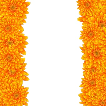 Yellow chrysanthemum border isolated on white background.