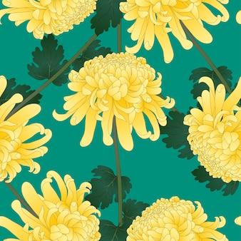 Yellow chrysanthemum flower on green teal background