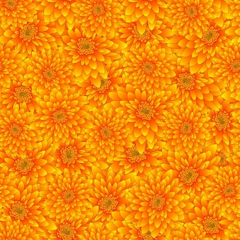 Yellow chrysanthemum seamless background