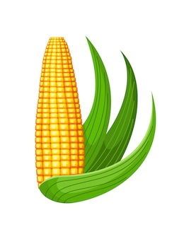 Yellow corn cob with green leaves