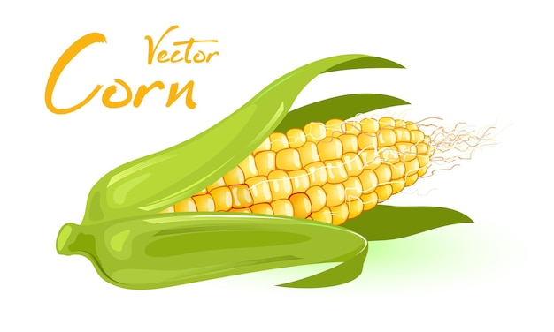 Yellow corn wrapped in green leaves