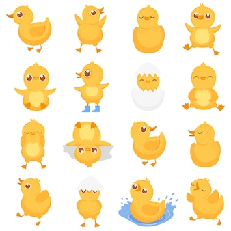 Yellow duckling, cute duck chick, little ducks and ducky baby isolated cartoon