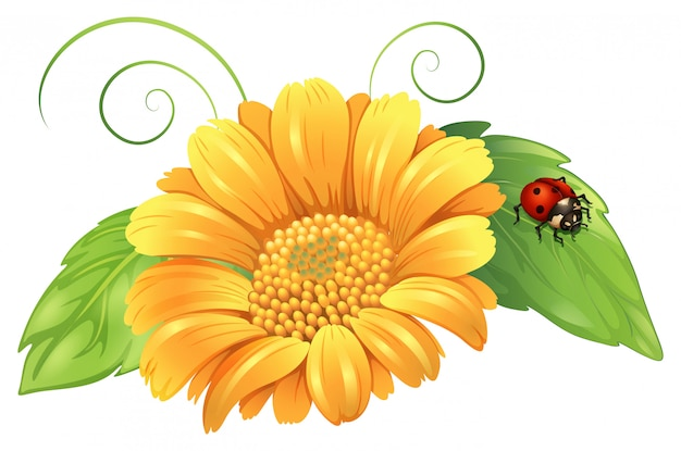 A yellow flower with leaves and a bug