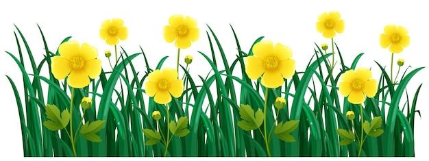 Fiori gialli nel cespuglio